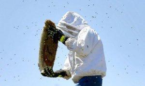 Thiết bị bảo hộ khi loại bỏ tổ ong