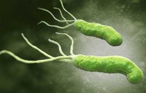 Hình ảnh vi khuẩn hp