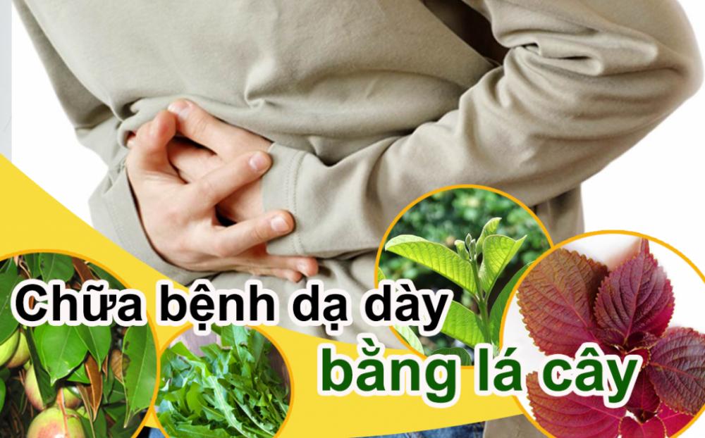 Bài thuốc nam chữa viêm loét dạ dày từ lá cây
