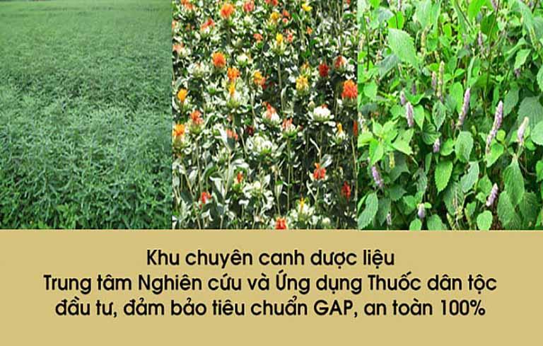 Vườn chuyên canh thảo dược đạt tiêu chuẩn GACP-WHO