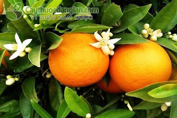 Công dụng của quả cam