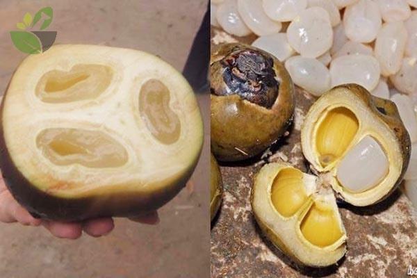Hạt đác và hạt thốt nốt