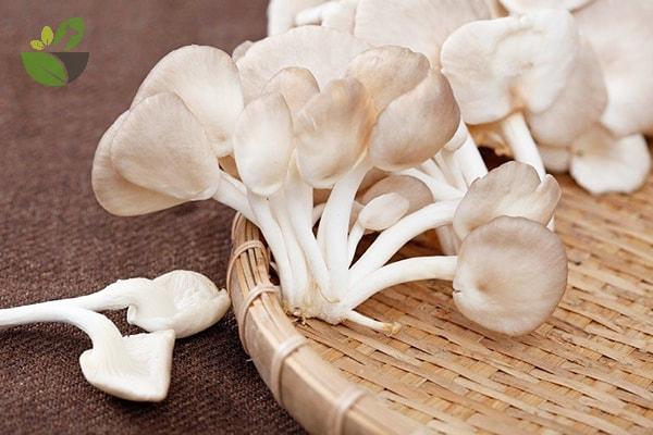 Tác dụng của nấm sò