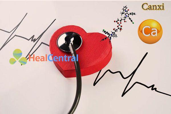 Vai trò của canxi trên tim mạch và tuần hoàn