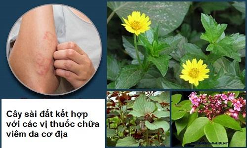 Cây sài đất chữa viêm da cơ địa: Tác dụng và cách tắm lá