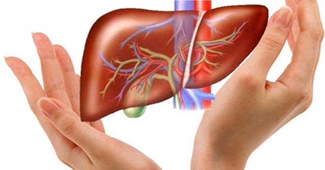 Cách-phòng-ngừa-bệnh-gan-nhiễm-mỡ-hiệu-quả-giúp-đem-lại-sức-khỏe-tốt